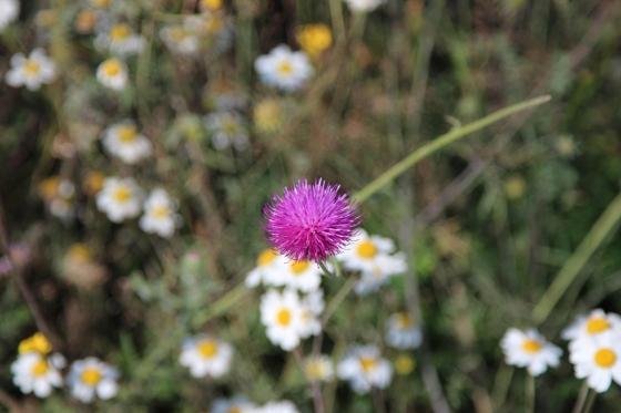 Flowers in Tusheti