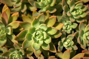 Xiamen Succulents